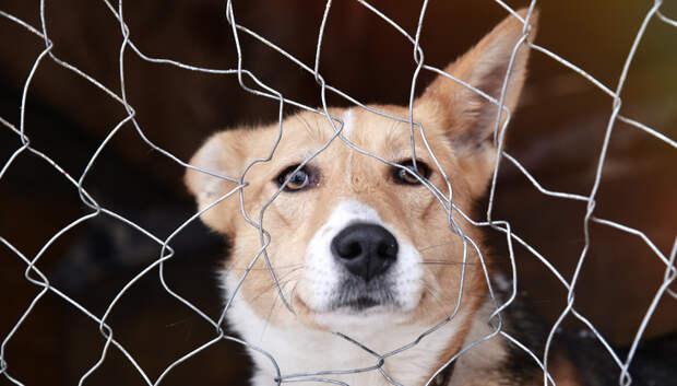 В Подмосковье начали постоянный мониторинг численности бездомных животных