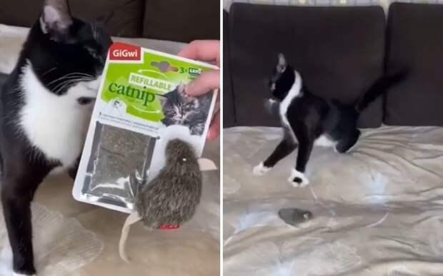 Перебрал: уморительную реакцию кота на кошачью мяту сняли на видео