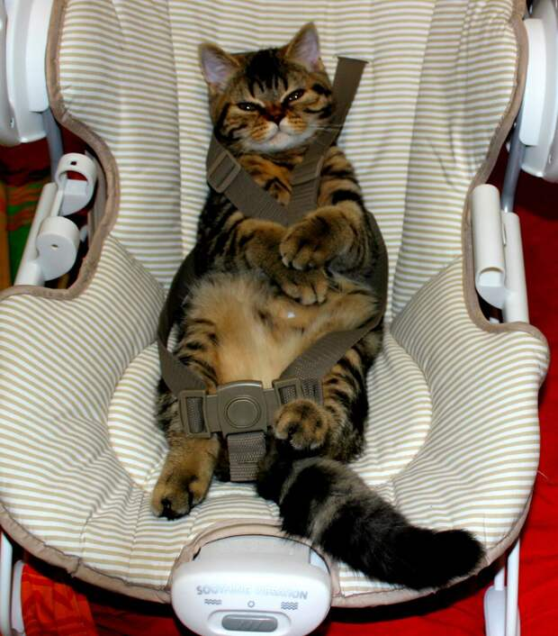 В доме, где есть кошка, других украшений не нужно!
