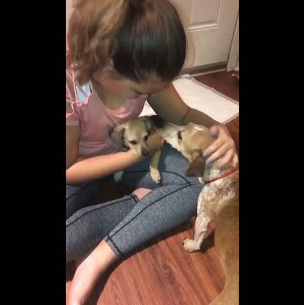 Мама-собака закрыла собой щенка, хотя, сама безумно боялась