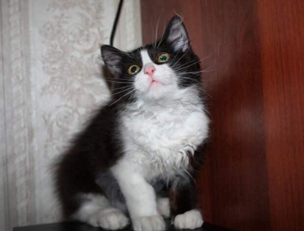 """Если вы ценитель """"уютных"""" котов, то поскорее забирайте Маркиза!"""