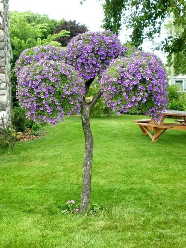 Не просто петуния, а целое дерево! Красивые идеи оформления