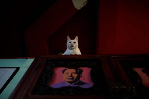 Американо-китайские отношения: чем закончится торговая война белой и чёрной кошек