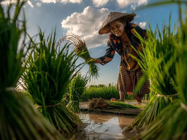 На рисовом поле в Таиланде