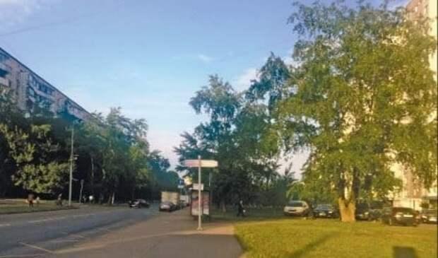 История района: Тополиная аллея стала памятником прежней улице