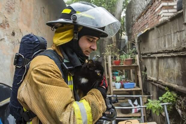 300 кошек и 7 собак спасли пожарные из горящего приюта в Санкт-Петербурге