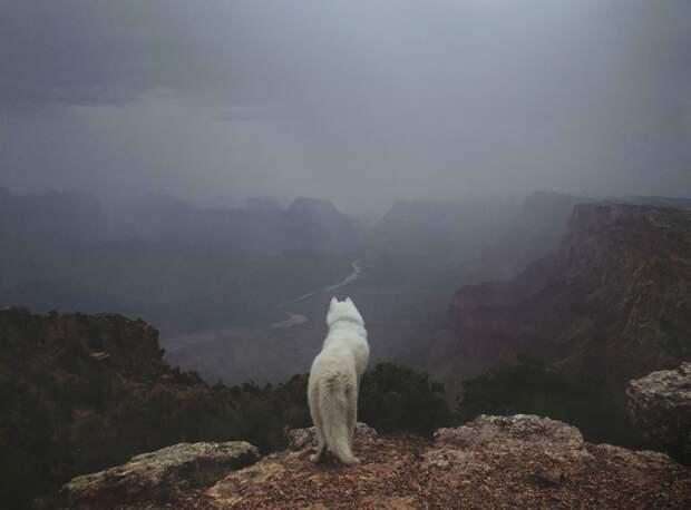 путешествие по США Джона Шторца и его собаки Вольфа (20)