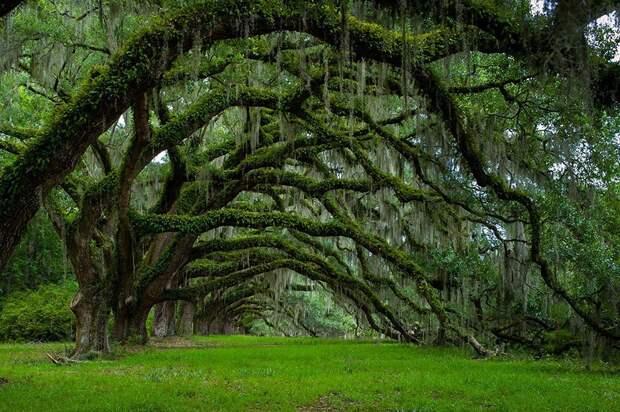 14 самых красивых и необычных деревьев на Земле
