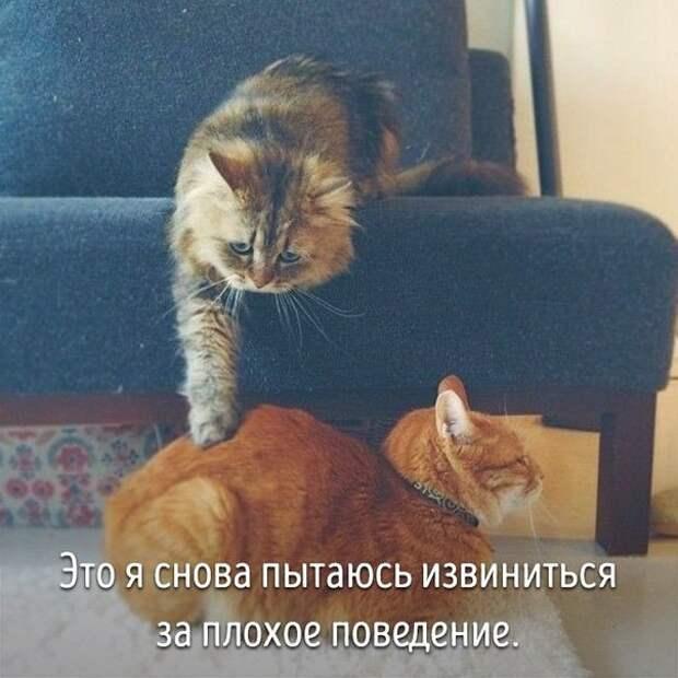 люди и животные это я