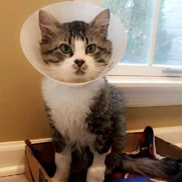 Узнав, что бездомный кот болен, потенциальная хозяйка испугалась. А потом поняла, что не в силах с ним расстаться