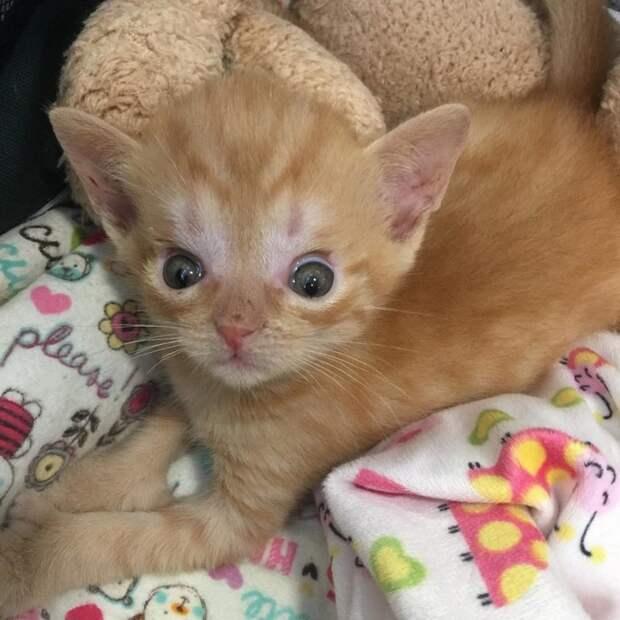 Неравнодушная женщина спасла котенка с гидроцефалией