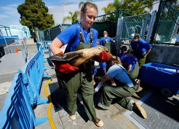 морские львы нуждаются в помощи-7