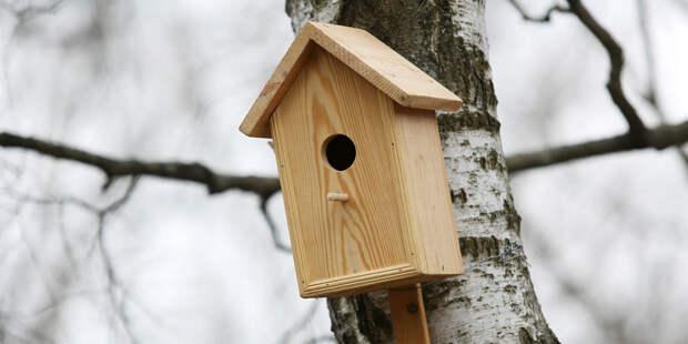 300 новых домиков для птиц появятся в городских парках