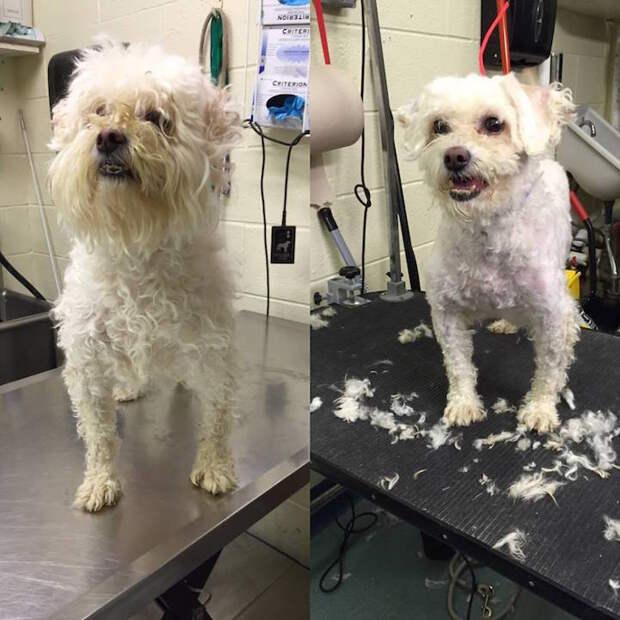 Мужчина делает модные стрижки бездомным собакам, чтобы они смогли найти себе новых хозяев