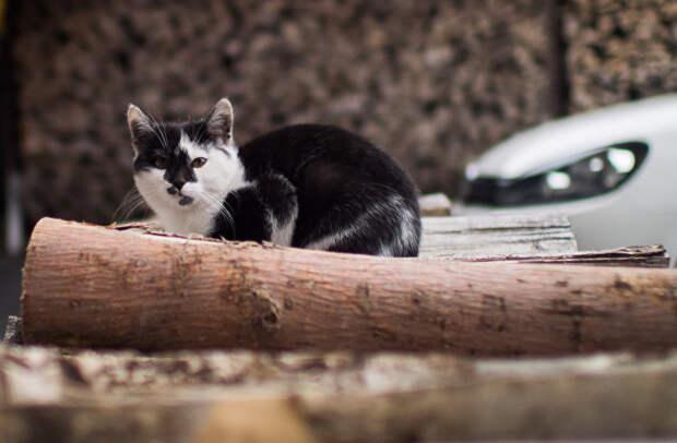 Кошка на территории биоотеля