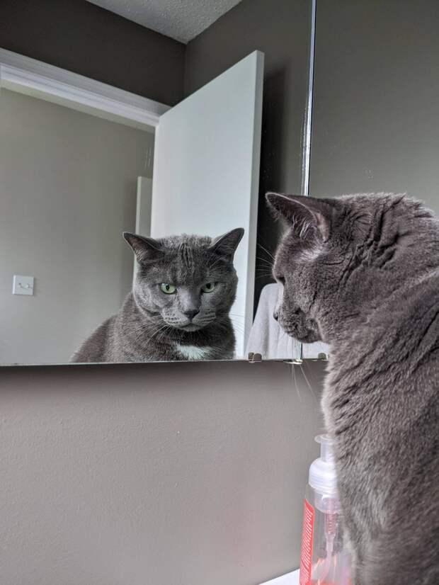 Хозяйка рассказала, как случай с её котом заставил её поверить в матрицу