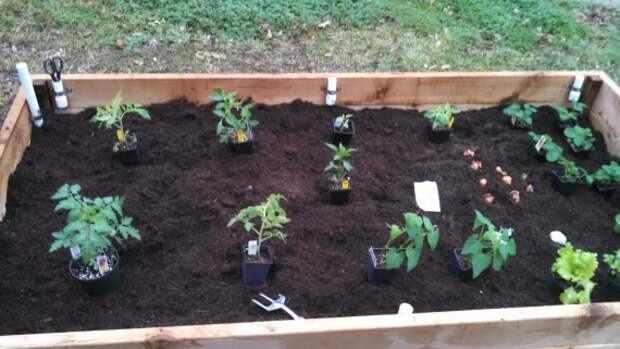 растения на капиллярной грядке: Органическое земледелие, пермакультура