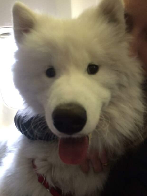 1. Собаки не догадываются о личном пространстве окружающих животные, пассажир, салон, самолет, собака, фотография
