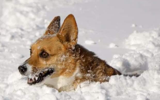 В США теперь можно сесть в тюрьму, если оставил собаку зимой на морозе