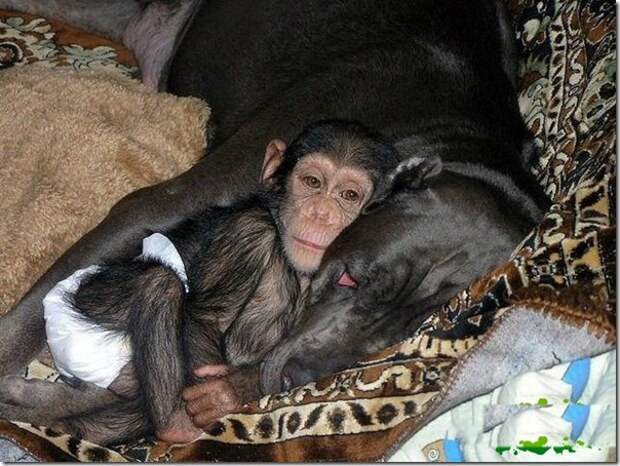 in-marmoset-a-new-mom_6_(www.funnypagenet.com)