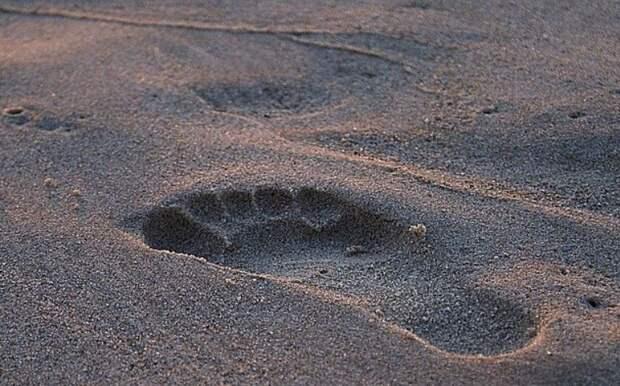 Следы человека возрастом 3,75 млн лет - кто их оставил?