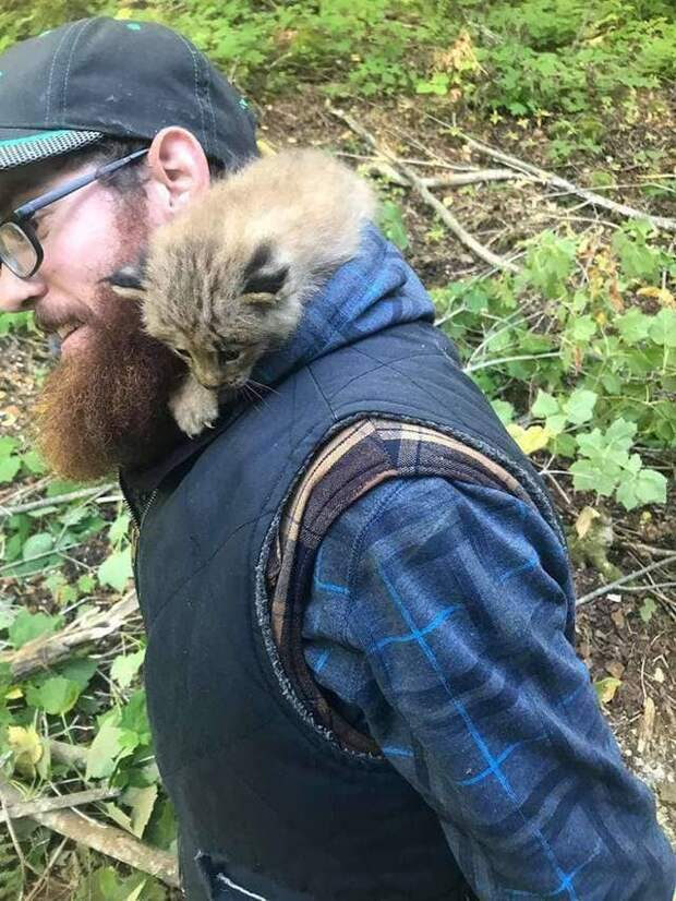 Велосипедист спас в лесу рысь, поначалу приняв ее за котенка