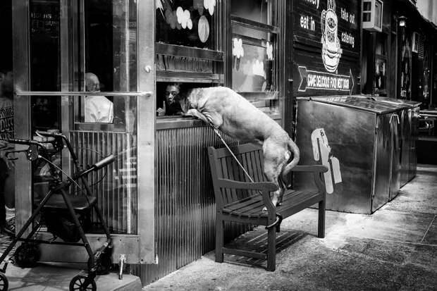 Собака в окне кафе в Нижнем Манхэттене