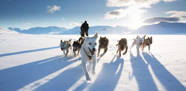 Собачья упряжка, Свальбард, Норвегия