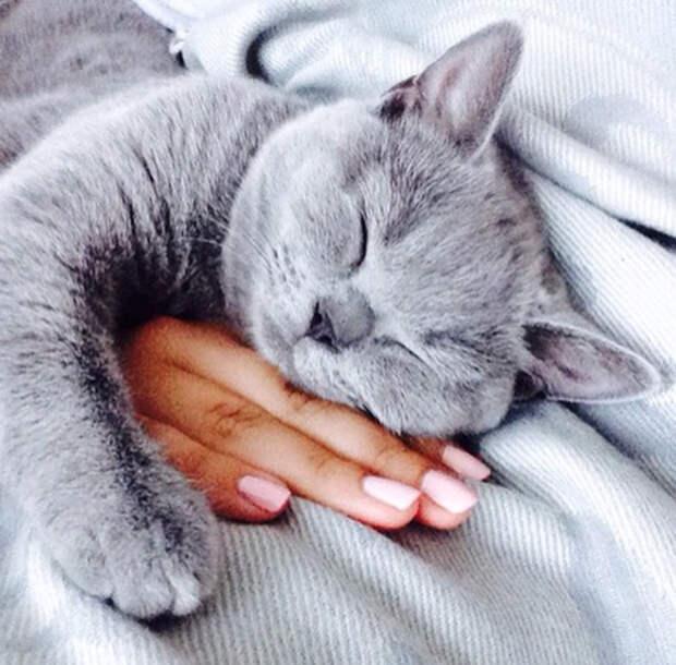 Как правильно спать с кошкой?