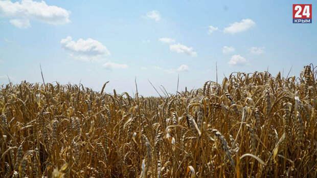 Фотозоны, выставки, забавы и обряды: в Симферополе пройдет акция, посвященная сбору урожая