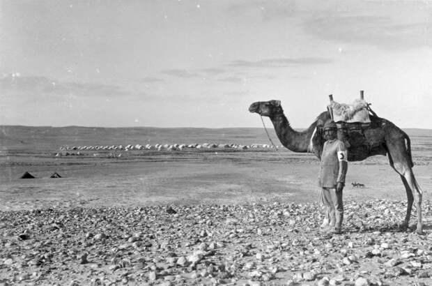Animals in World War I (10).jpg