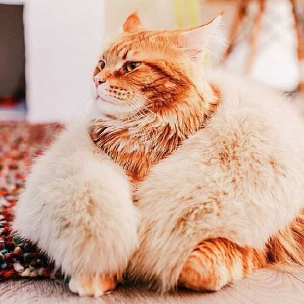 Такое оригинальное прозвище кот получил за свой невероятно величественный взгляд и царские повадки.