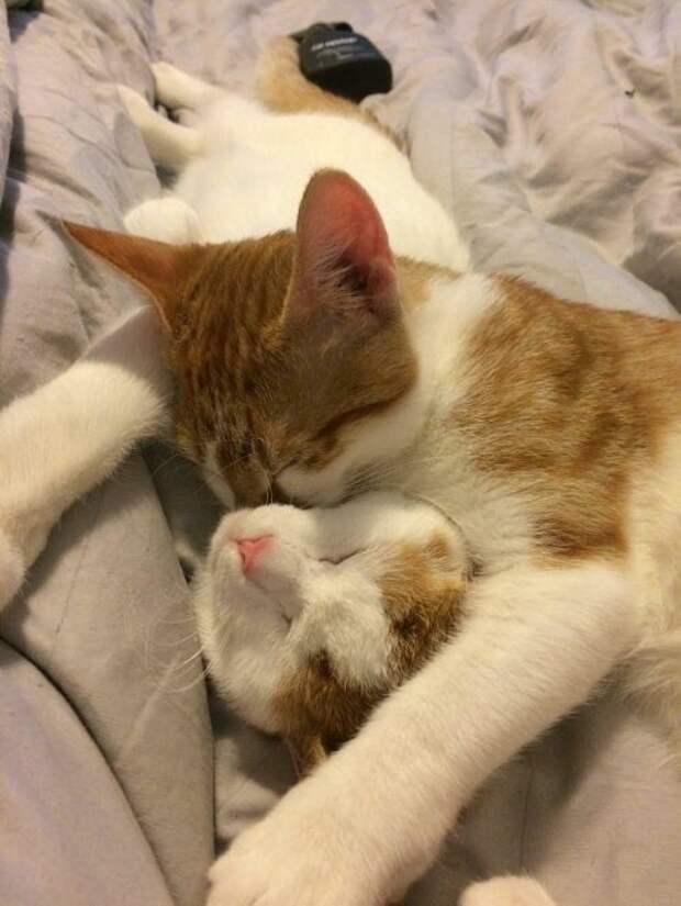 Они согревали друг друга своим теплом, чтобы выжить