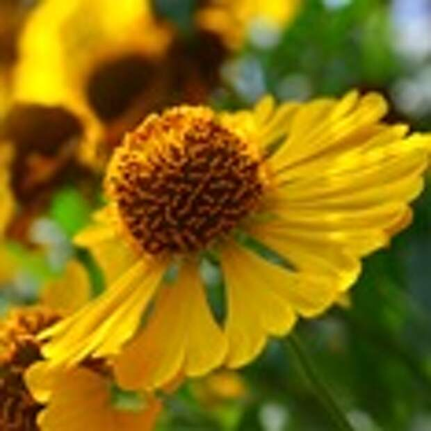 Съедобные и ароматные цветы для сада, балкона и террасы