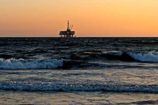 Сотни морских обитателей погибли в результате разлива нефти в Израиле