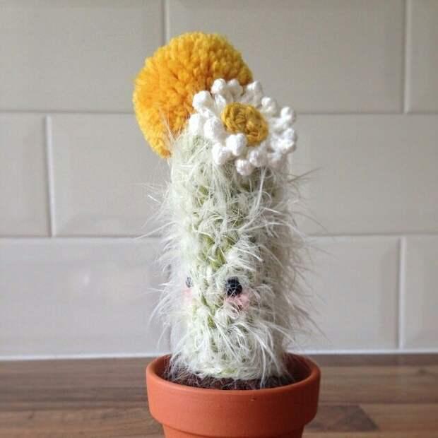 Самые милые кактусы в мире (подборка)