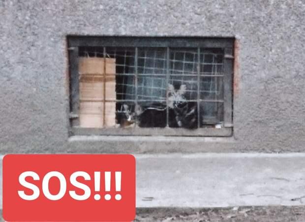 Умоляем о помощи! Сантехник, который обслуживает этот дом, ненавидит кошек и людей, которые им помогают. Известно, что маленьких котят с их мамой он заливал кипятком.