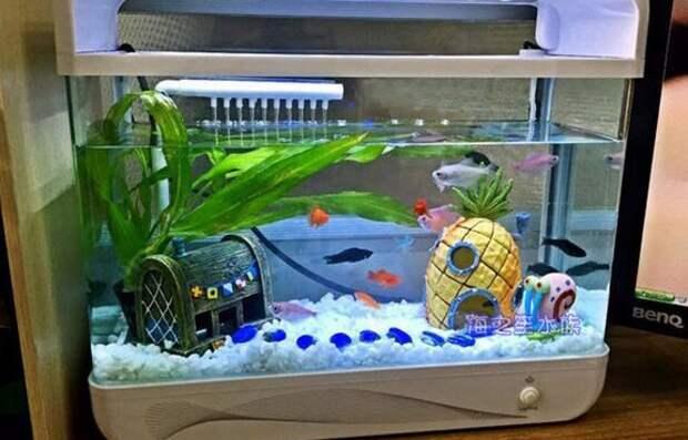 Домики для Спанчбоба и Ко в аквариум. Аквариум Бикиниботом