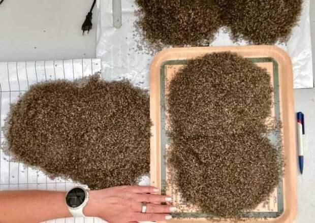 Жительница Норвегии похвасталась уловом комаров: замесяц набралось ведро кровососов