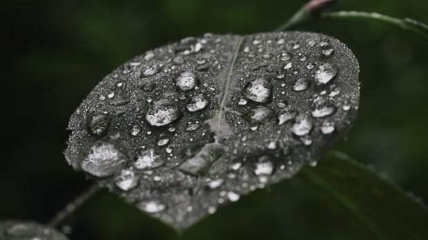 День ВДВ в Петербурге завершится сильными дождями