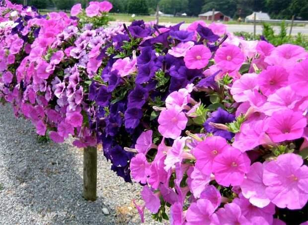 Если у вас возникло желание создать настроение в своем саду с помощью ароматов . ; Советы от Элеоноры Басмановой, историка, авто