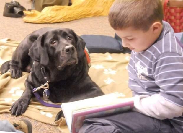 2. Песик дарит уверенность в себе дети, домашние животные, собака, собаки