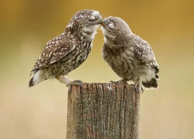 Любовь в мире животных