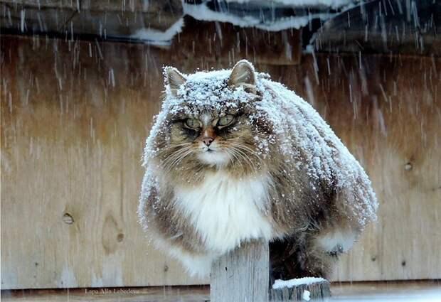 Необычная колония рыжих под Барнаулом животные, коты