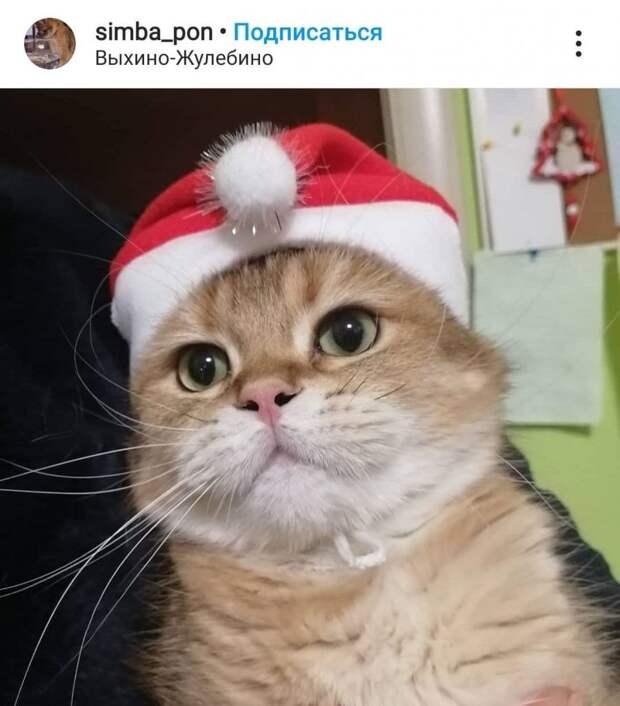 Фото дня: усатый Дед Мороз