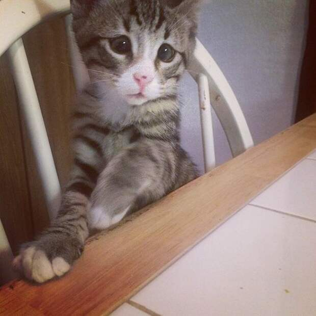 котёнок с обеспокоенным выражением мордочки, котёнок Бум