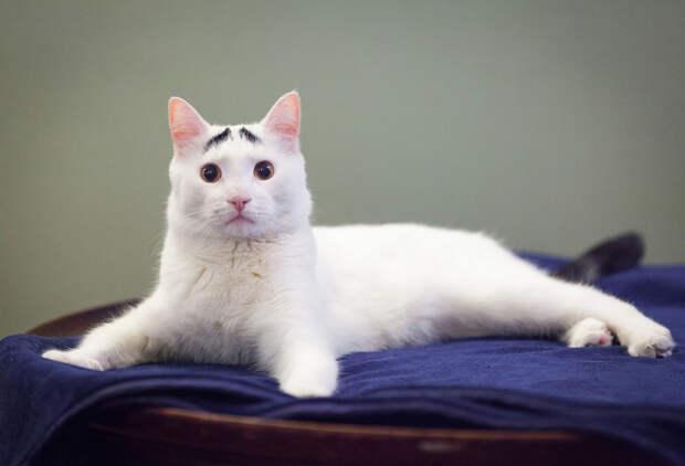 Кот Сэм прославился на весь мир как кот с бровями