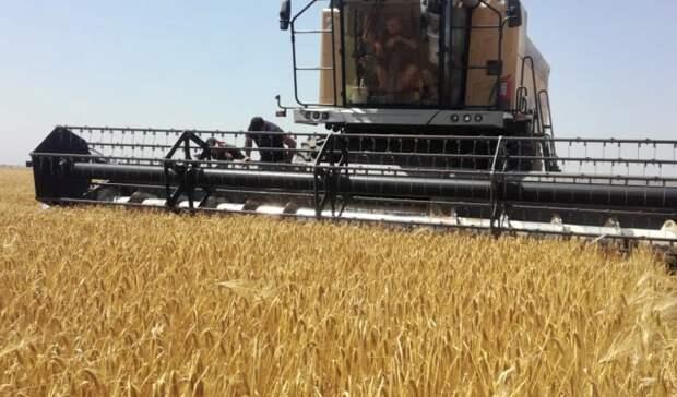 Уборка зерновых началась навостоке Ставрополья