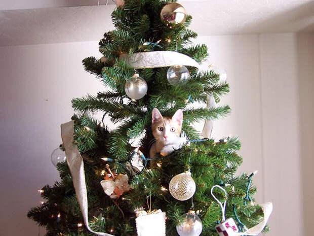23. Еще одно украшение  елка, кошка, подборка