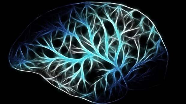 Биологи из Великобритании объяснили, как коронавирус поражает мозг